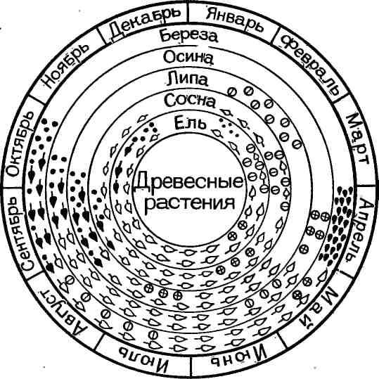 Схема годового цикла жизни