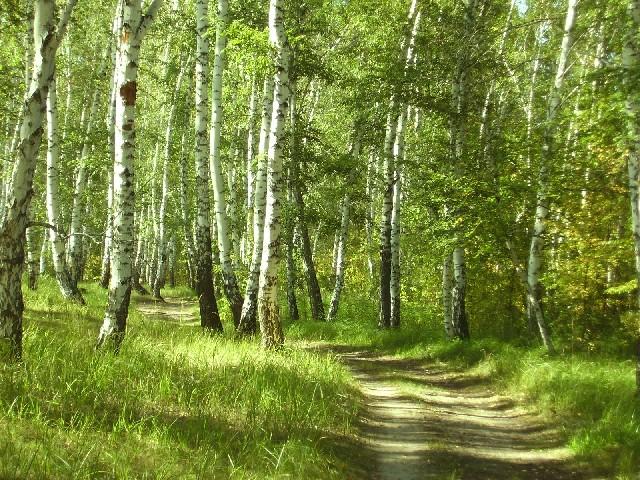 Россия тайга леса умеренного пояса