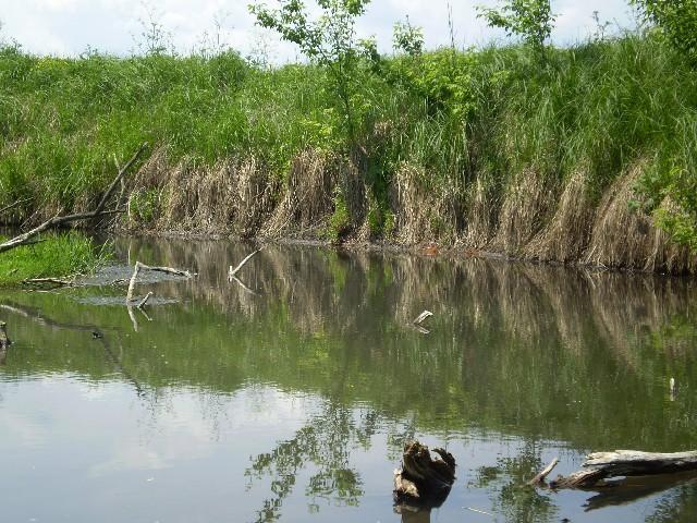 рыбалка в репьевке воронежской