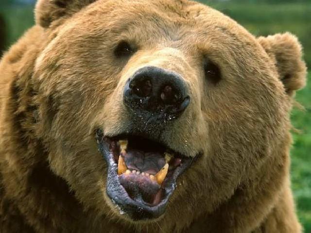 смотреть комедии онлайн бесплатно про животных: