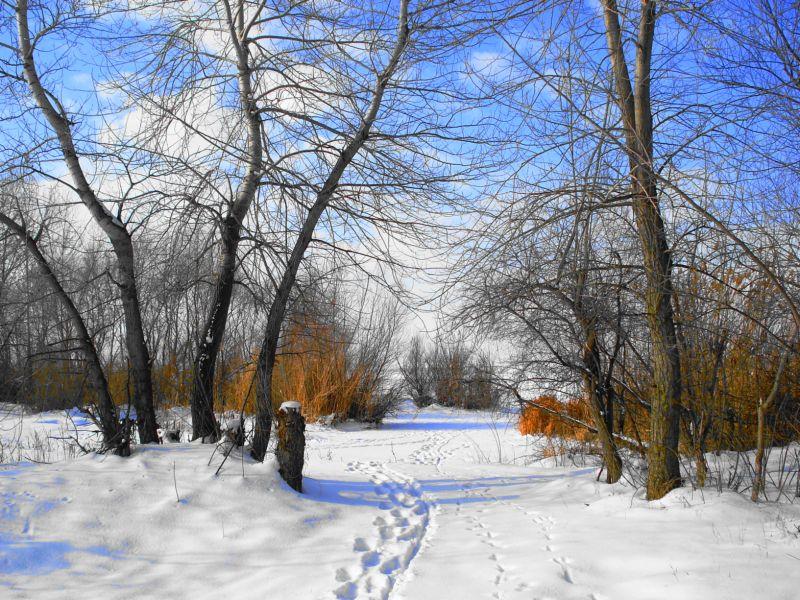 Картинки природа россии зима